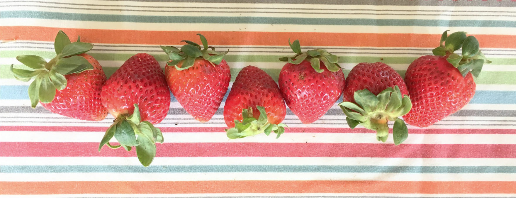 a line of strawberries