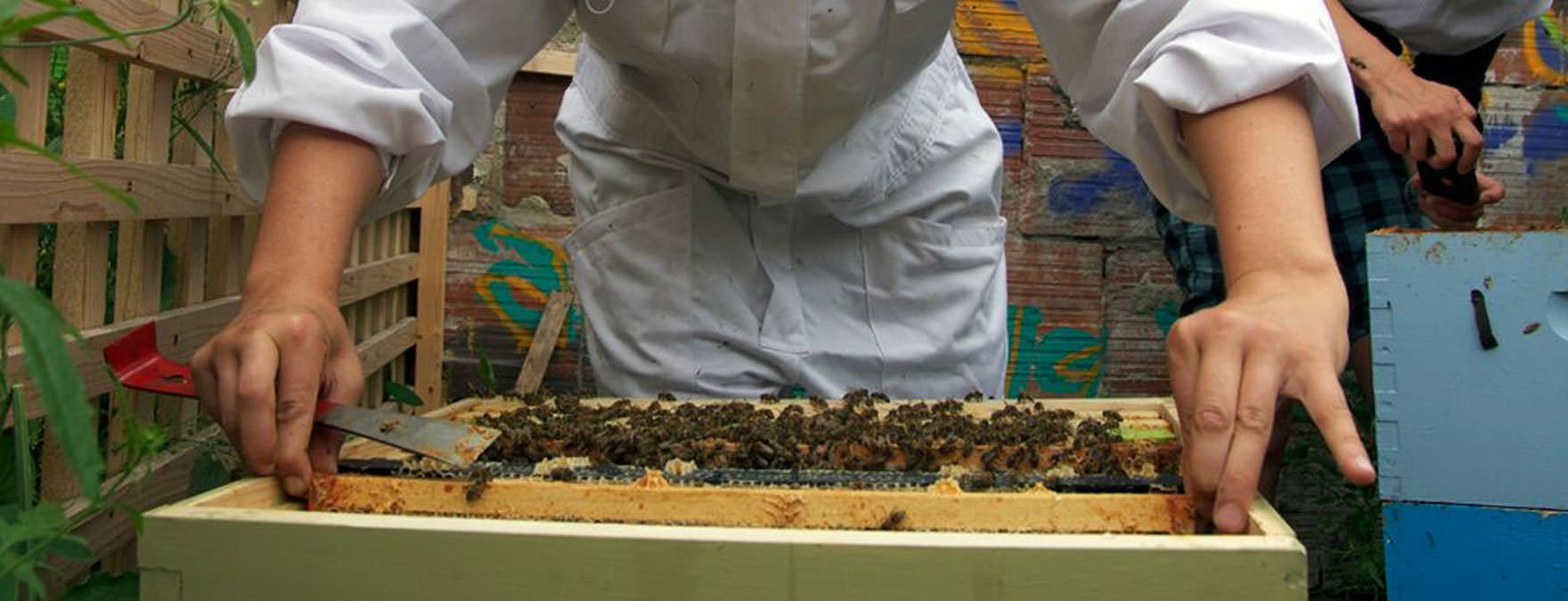 urban_apiary_beekeeping_THINK_resize