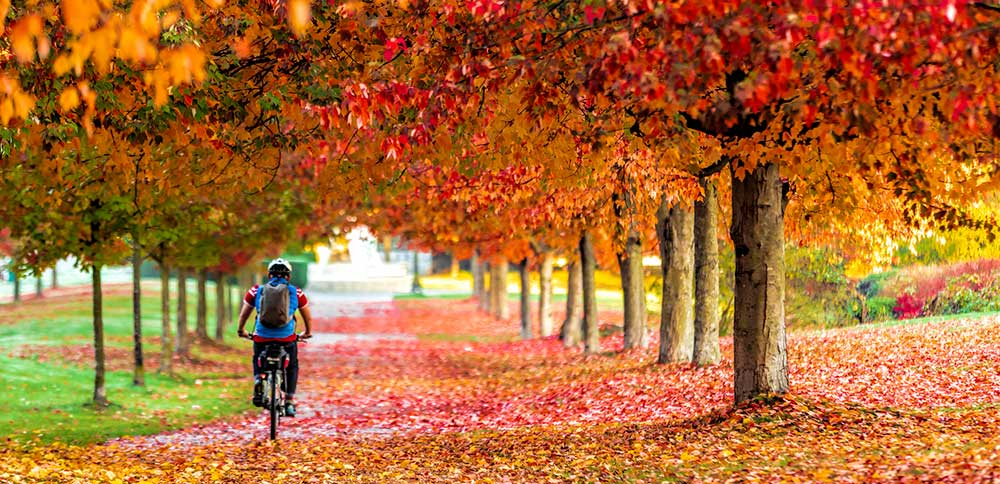 Free and cheap things to do in Metro Vancouver this fall